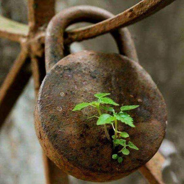 Plant growing out of a lock